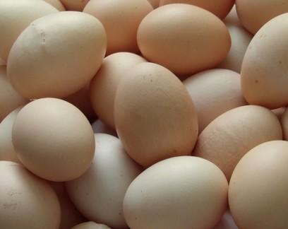 Brasil exportou 7,3 mil toneladas de ovo, até setembro, mais que o dobro de 2020