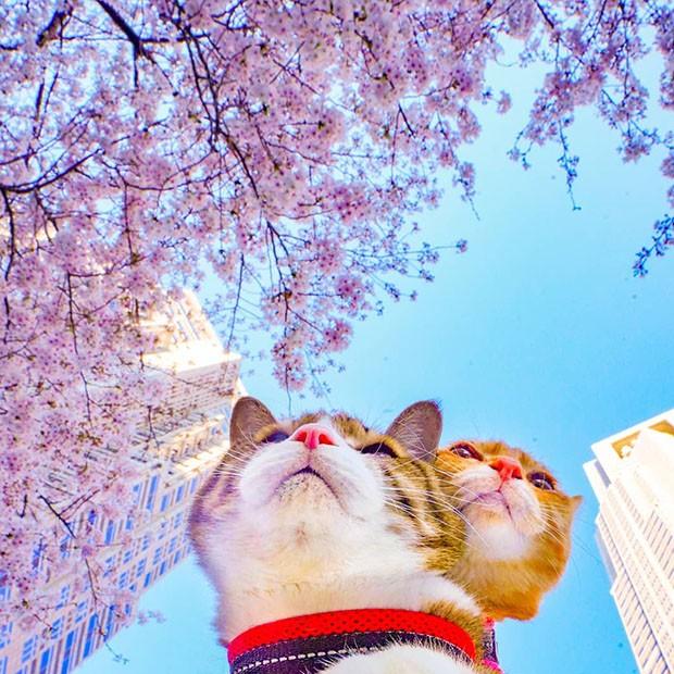 Os gatinhos já viram mais de mil destinos turísticos. (Foto: Instagram/the.traveling.cats)