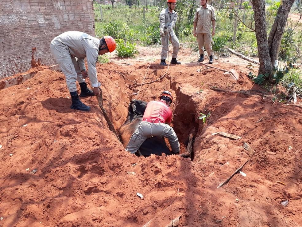 Quatro bombeiros participaram do resgate de vaca que caiu em formigueiro, em Campo Grande. — Foto: Osvaldo Nóbrega/TV Morena