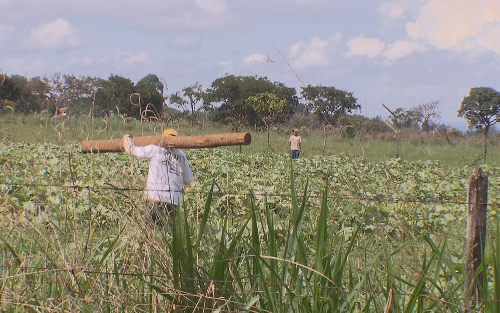 Chácara em zona rural de Santa Maria, no Distrito Federal, onde foram encontrados macacos mortos (Foto: TV Globo/Reprodução)