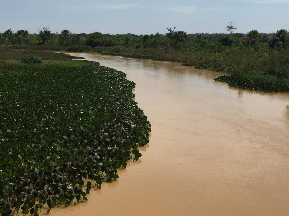 Mudas de árvores serão plantadas às margens do Rio Pandeiros — Foto: Divulgação