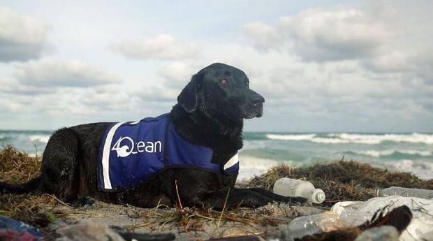 A labradora é o animal de estimação do cofundador da 4Ocean (Foto: 4Ocean)