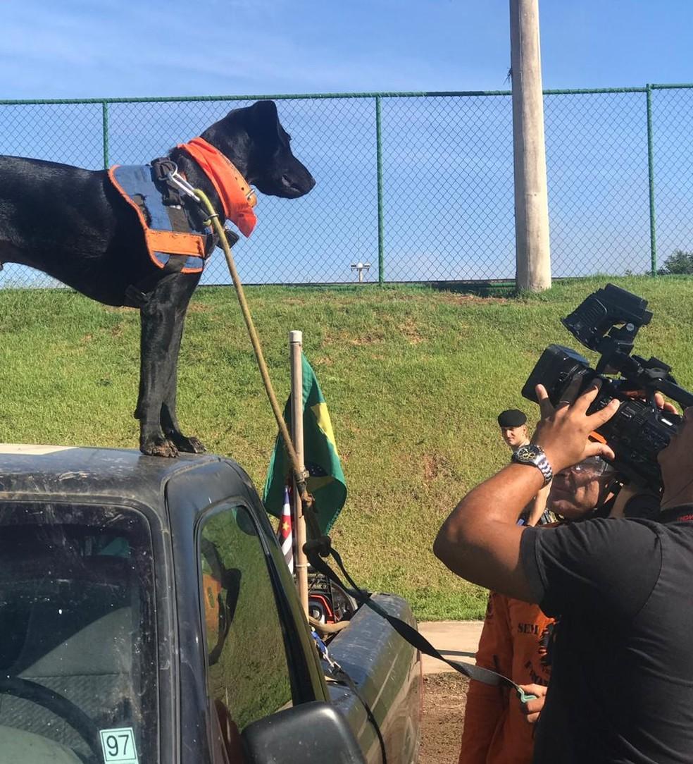 'Resgate' trabalha nos resgates e também faz pose para a câmera — Foto: Mariana Queiroz/GloboNews