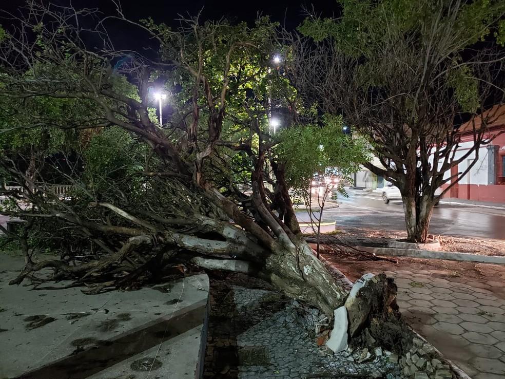 Uma das árvores que caiu em Barreiras após vendaval na noite de domingo (2)  — Foto: Paiva/BlogBraga