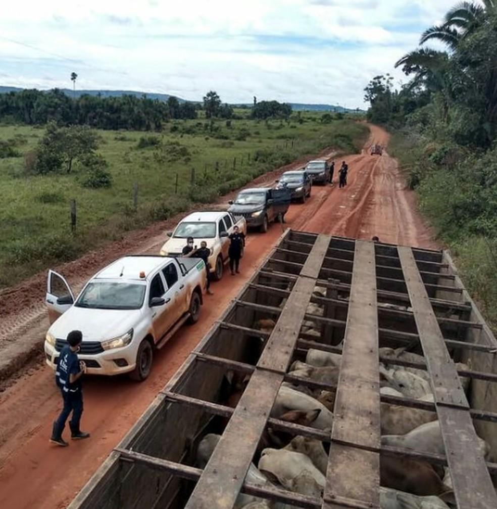 Operação boi fantasma em Rondônia — Foto: Reprodução/Redes Sociais