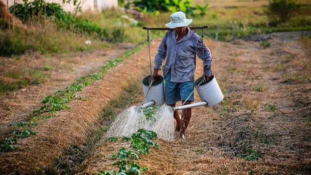 Produtor; plantação; agricultura (Foto: Pexels)