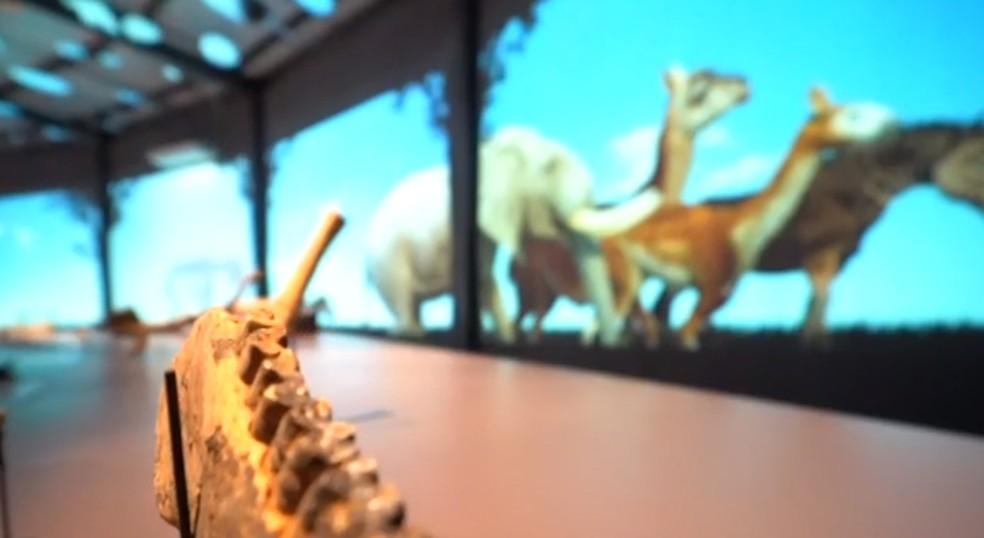 Museu da Natureza tem fósseis de animais gigantes.  — Foto: Reprodução/TV Clube
