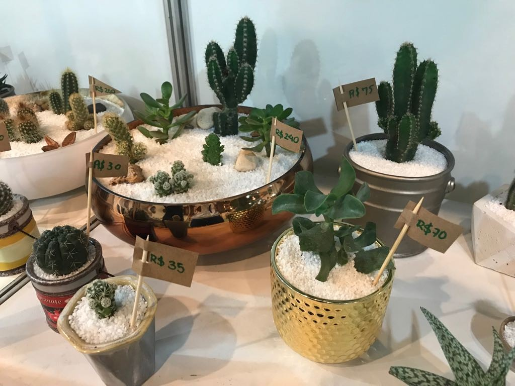 Terrários com cactos decorativos fazem sucesso na Fenearte