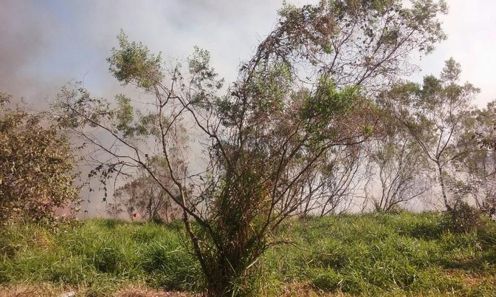 Suspeita é de que fogo tenha sido provocado intencionalmente, segundo a GCM (Foto: Prefeitura de Araçoiaba da Serra/Divulgação)