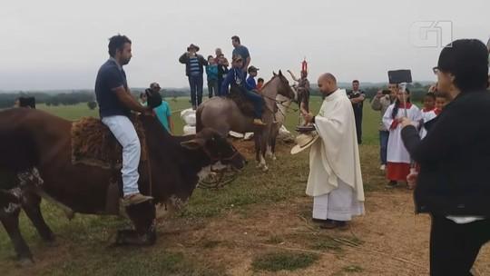 Boi vira 'celebridade' após fazer reverência para imagem de santo em SP; vídeo