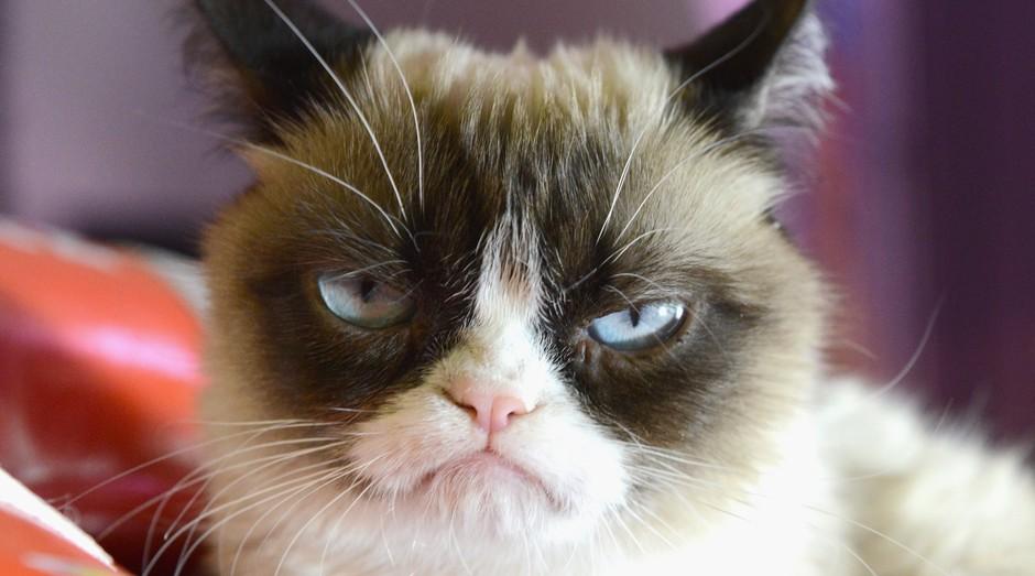 Real Grumpy Cat, um dos perfis de maior sucesso nas redes sociais  (Foto: Reprodução)