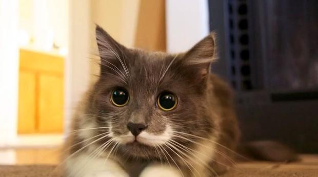 Um dos mais fofos do mundo, o gato hipster ganhou a internet (Foto: Reprodução)