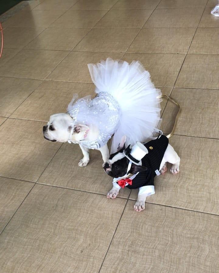 Cachorros de Carlinhos Maia e Lucas Guimarães no casamento (Foto: Reprodução/Instagram)