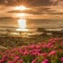Papel de Parede: Beach Flowers
