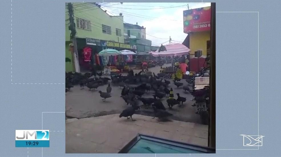Em alguns momentos, vários urubus lotam ruas e ficam próximos a comércios na cidade — Foto: Reprodução/TV Mirante