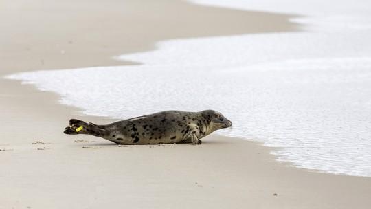 Foto: (Theresa Keil/The National Aquarium via AP)