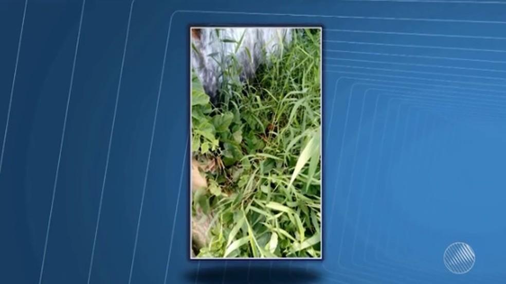 Criança foi achada por duas mulheres em um terreno baldio, em Itacaré (Foto: Reprodução/ TV Santa Cruz)