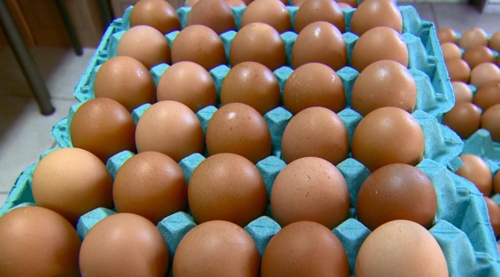 """Ovos: Globo Rural deste domingo mostrou galinhas criadas no sistema """"cage free"""", ou livres de gaiolas — Foto: Reprodução EPTV"""