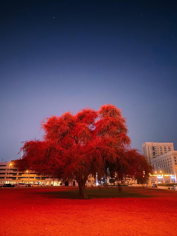 A rica cor vermelha da árvore e do solo confere à imagem um destaque surpreendente — Foto: Reprodução/Instagram/@mitsun