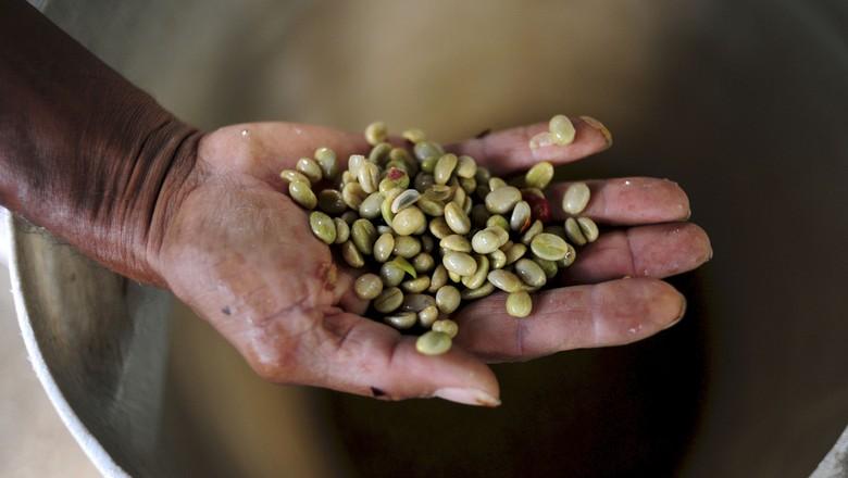 cafe-colombia-recem-colhido-cafe-verde (Foto: CIAT/CCommons)
