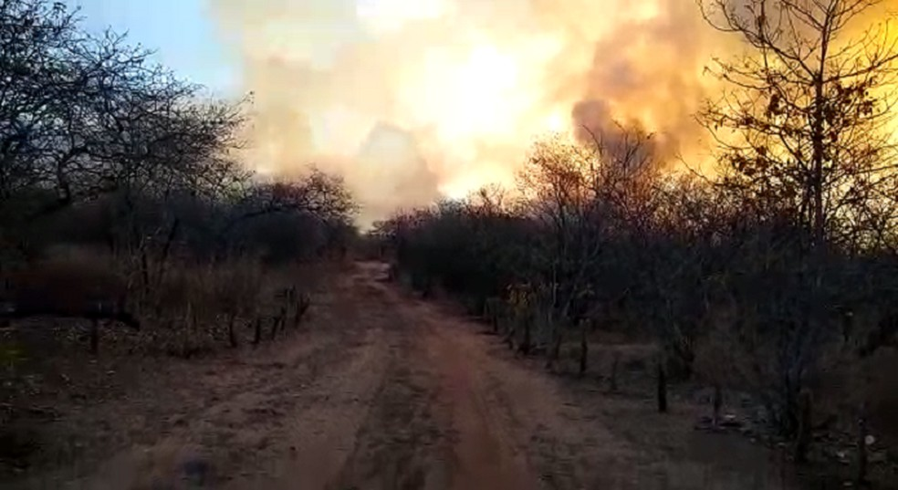 Corpo de Bombeiros afirmou que as chamas começaram nesta segunda-feira por volta das 14h. — Foto: Corpo de Bombeiros