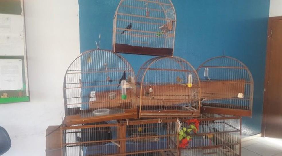 -  Pássaros foram encontrados pela PMA em bairro de Três Lagoas  Foto: Polícia Militar Ambiental/Divulgação