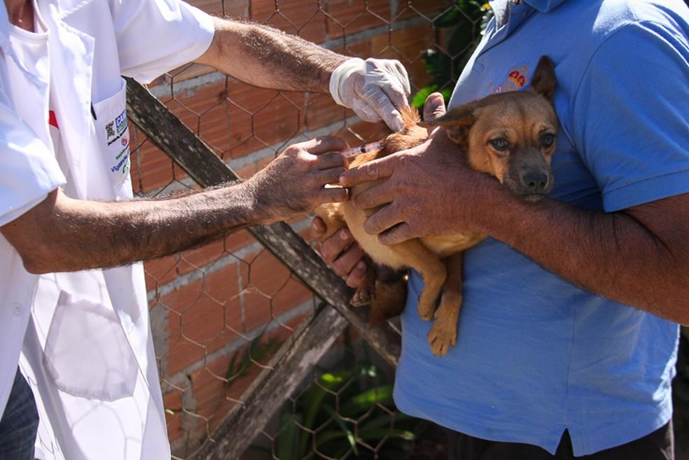 Cães e gatos são vacinados em campanha itinerante em Campos (Foto: Prefeitura de Campos/Divulgação)