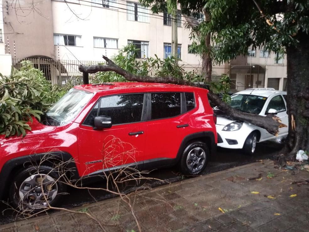 Galhos de árvore caíram sobre dois carros na Rua Santa Joaquina de Vedruna, em Maringá, na tarde desta segunda-feira (19) (Foto: Defesa Civil de Maringá/Divulgação)
