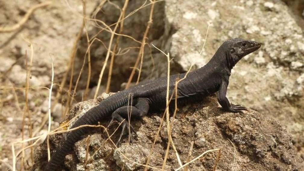 Com a erradicação das espécies invasoras, a vida selvagem conseguiu prosperar — Foto: Jenny Daltry via BBC