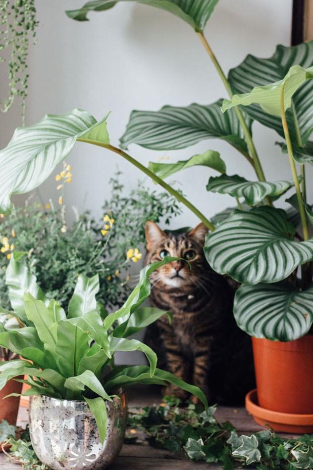 11 aplicativos para cuidar de plantas (Foto: Divulgação/Reprodução)