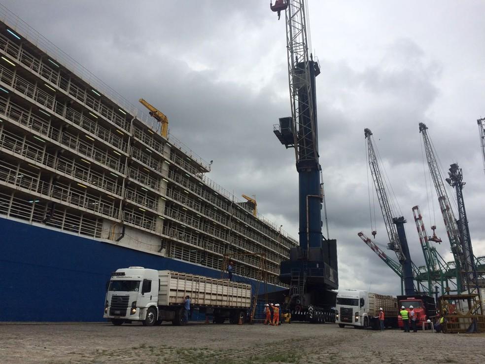 Embarcação deve receber 27 mil bois para serem transportados até a Turquia (Foto: Divulgação/Ecoporto)