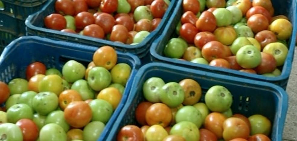 Preço do tomate aumentou  — Foto: Divulgação/TV Anhanguera