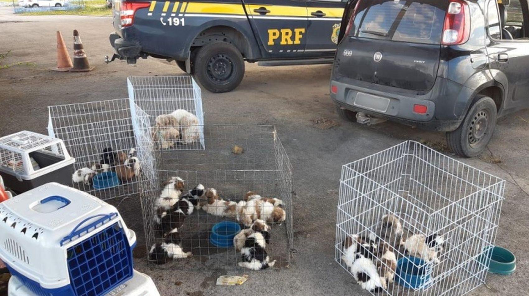PRF flagra veículo com 24 cães transportados em situação precária na BR-101 em Sergipe