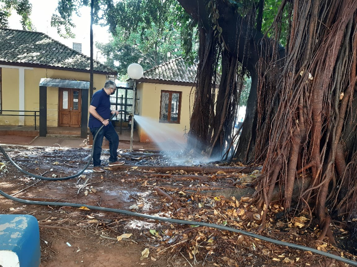 Após incêndio, prefeitura tenta recuperar árvore centenária em Limeira