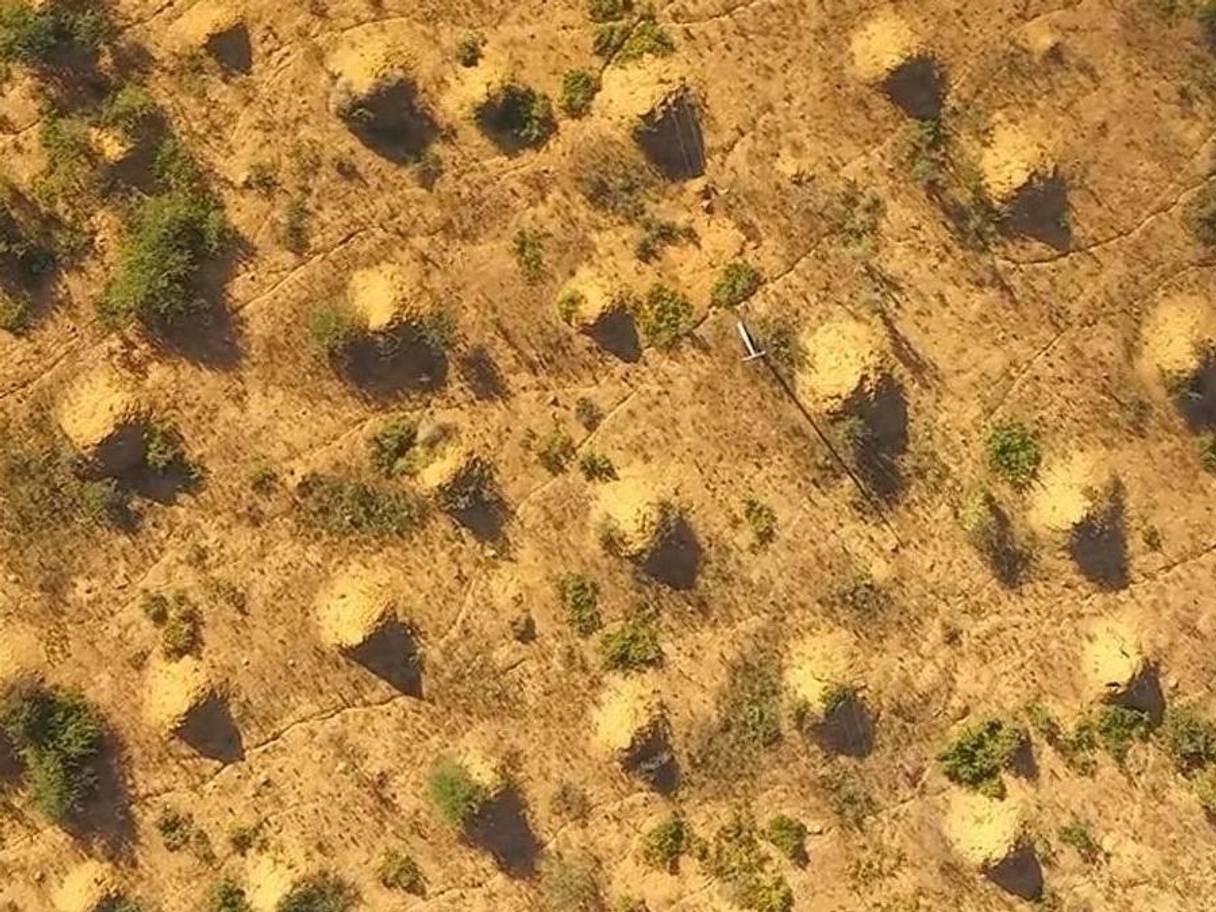 Pesquisadores descobriram uma colônia de super-cupins no Brasil (Foto: Reprodução Stephen Martin)