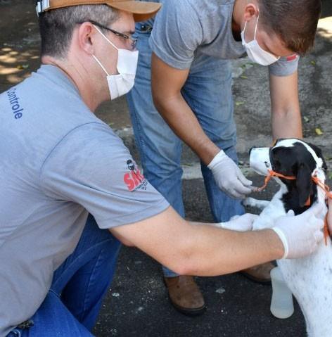 Centro de Controle de Zoonoses realiza plantão para atendimentos de cães e gatos neste sábado