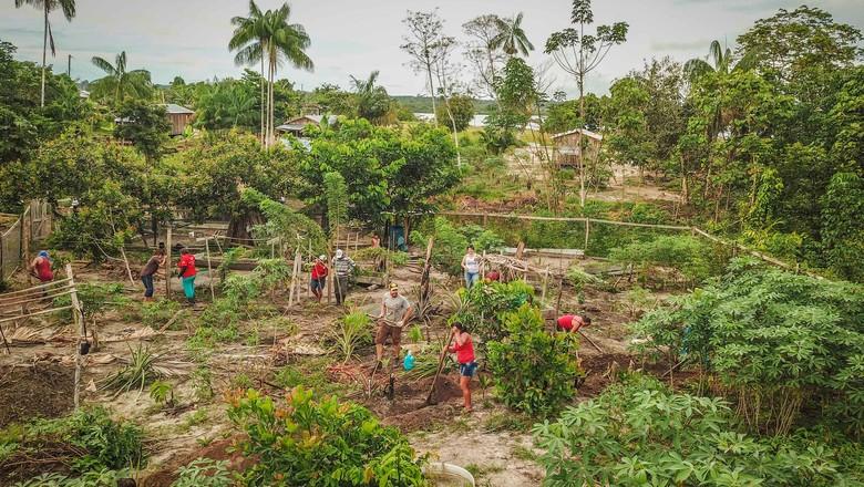 Agrofloresta (Foto: Pretaterra/Divulgação)