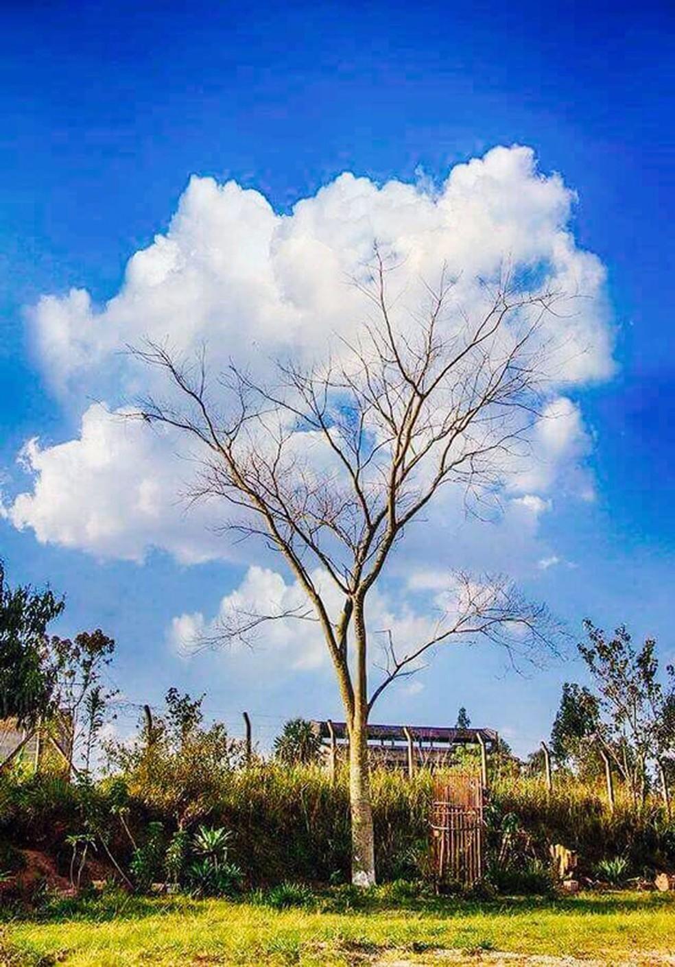 Foto de árvore circundada por nuvens causou embate entre dois brasileiros sobre autoria — Foto: Arquivo pessoal