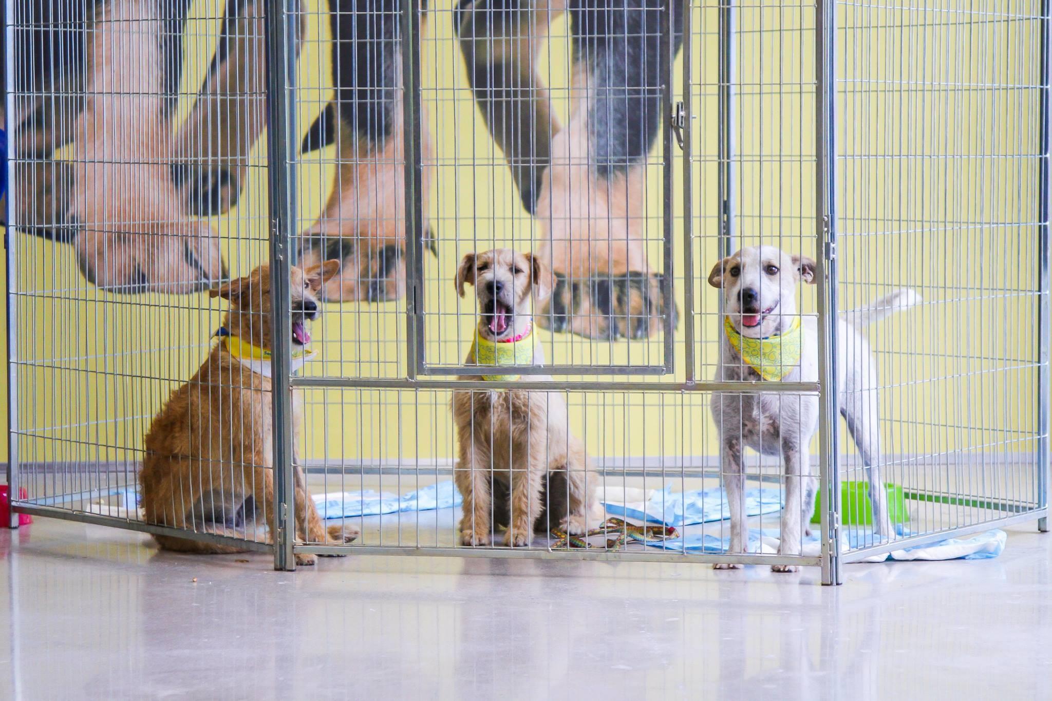 Rede de petshop Petz anunciou que irá parar de vender  cães e gatos (Foto: Reprodução/Facebook)