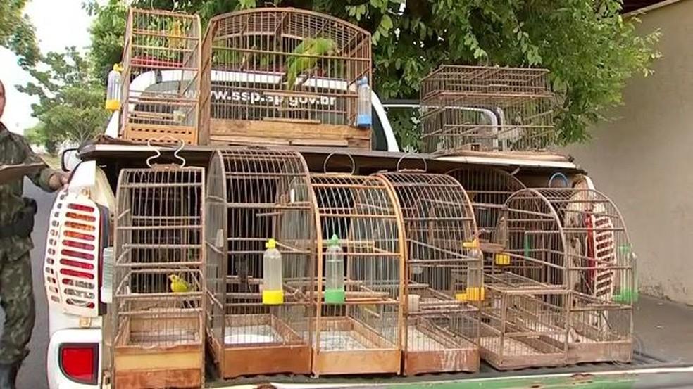 Polícia apreendeu 50 aves durante operação no noroeste paulista (Foto: Reprodução/TV TEM)