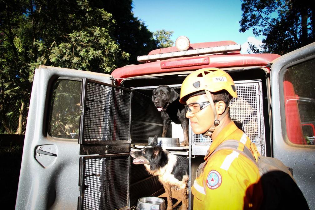 Cachorros auxiliam bombeiros e voluntários em busca de vítimas e desaparecidos em Brumadinho  — Foto: Fernando Moreno/Futura Press/Estadão Conteúdo