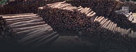 Polícia apreende cerca de 1.200 estacas de madeira ilegal em porto do Moju, nordeste do Pará