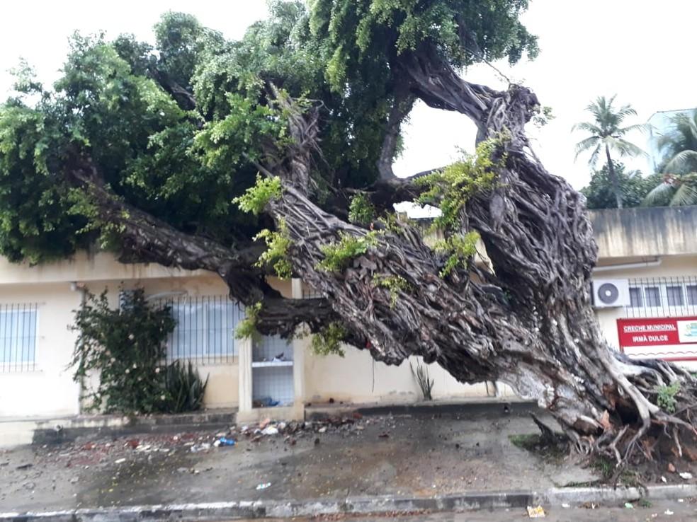 Árvore caiu sobre creche da rede municipal do Recife, nesta sexta-feira (2) — Foto: Reprodução/WhatsApp