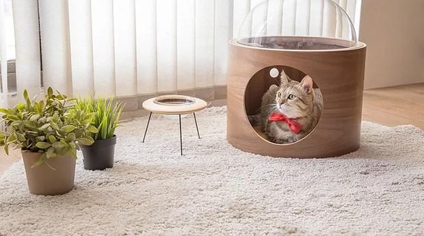 Camas são feitas de madeira e acrílico transparente, para o gato observar o entorno (Foto: Divulgação)