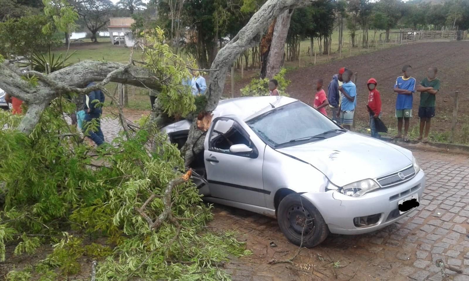 Árvore cai sobre carro após ventania em Carapebus, no RJ; ninguém ficou ferido - Notícias - Plantão Diário
