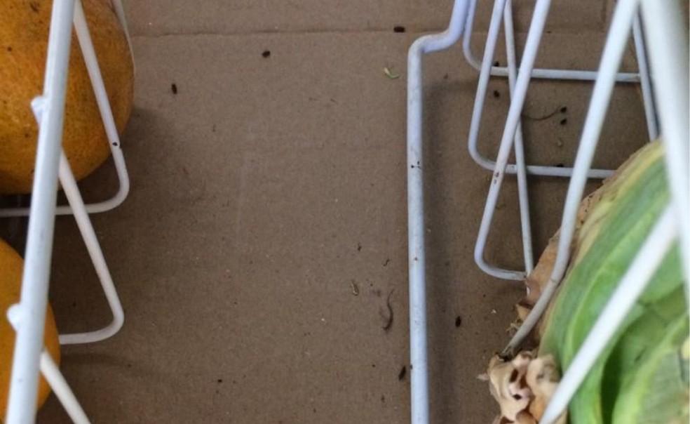 Fezes de rato foram encontradas em meio a alimentos (Foto: Divulgação)