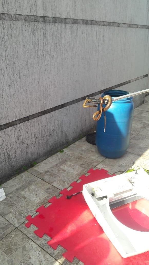 Bombeiros encontram cobra com mais de 1 metro em máquina de lavar na Grande Natal