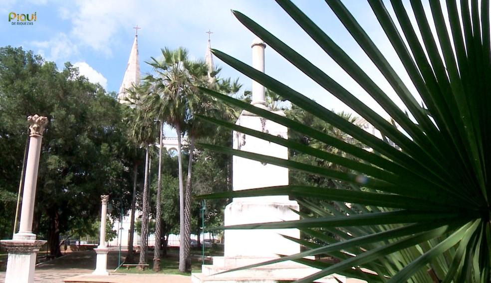 Carnaúba, a árvore símbolo do Piauí, vira exportação, oportunidade e até livro — Foto: TV Clube