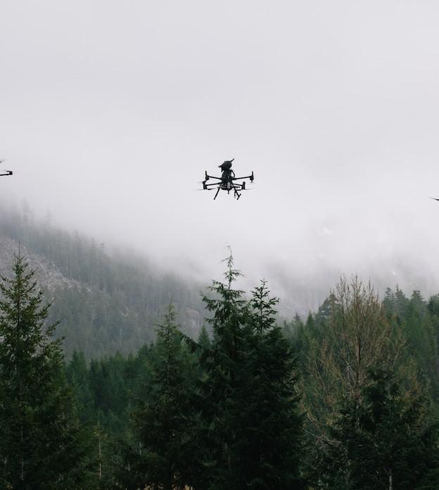 Startup do Canadá planeja plantar 1 bilhão de árvores usando drones