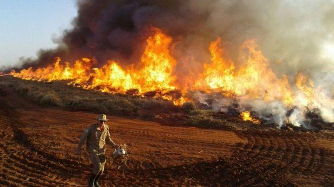 O número de focos de incêndio e de alertas de desmatamento cresceu - mas o Ibama diminuiu o ritmo das multas. Na foto, uma queimada no Mato Grosso do Sul (Foto: Bombeiros MS via BBC News)